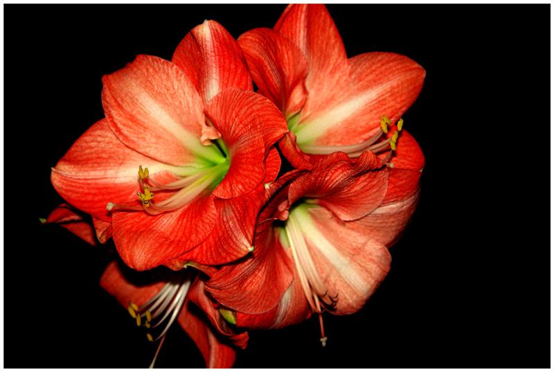 Картинки растений красной книги с названиями 17